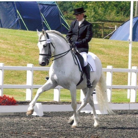 Valen Radian - caballo pura raza española